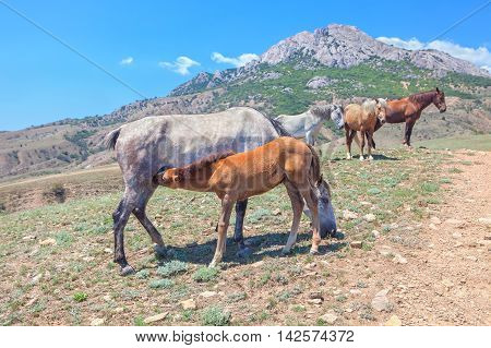 beautiful scene with mare and foal and other horses
