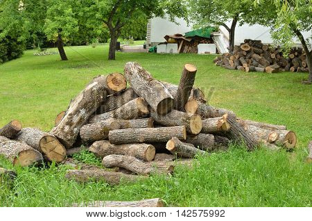 Pile of cut logs on a house lawn