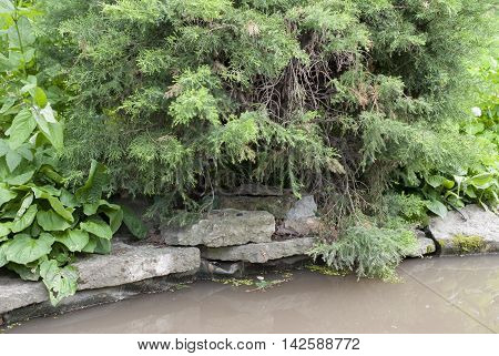 shore of the pond with overhanging trees water
