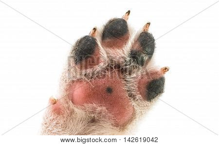 paw puppy doggy on a white background