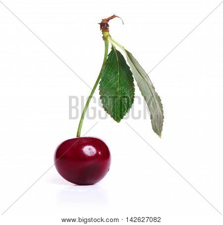 One Sweet Cherry With Green Leaf Isolated