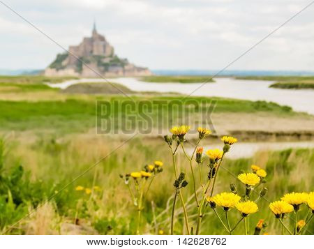 Wild meadow herbs and Mont Saint-Michel as blurred background, France