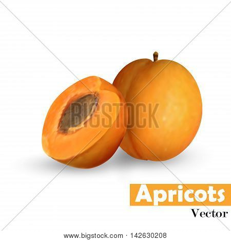 Whole apricot slice with pit isolated on white background. Vector illustration.