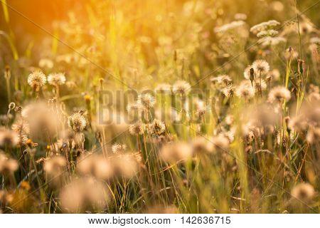 Dreamy Atmosphere Of Romantic Summer Meadow