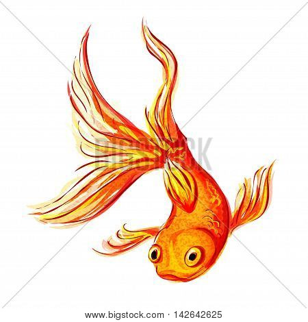 Isolated gold aquarium fish on a white background. Vector illustration.