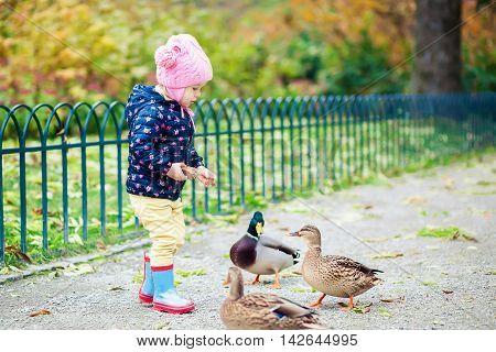 little girl feeding ducks bread in the autumn park