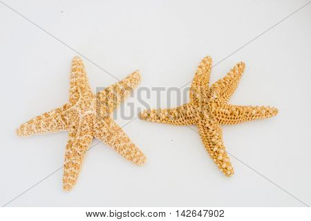Two sea stars on a light background
