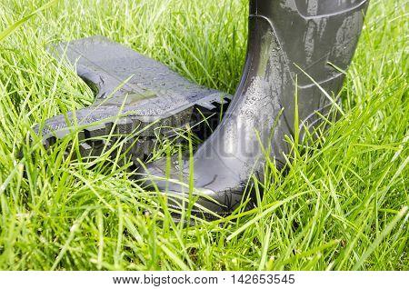 Wet rubber boots on green lush grass