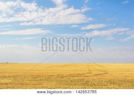 Stubble field after wheat harvesting on the background of blue sky with clouds
