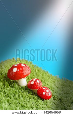 Three Mushroom In The Meadow After Rain