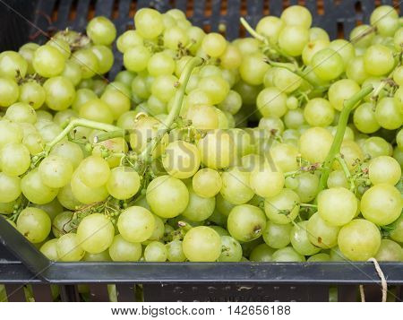 Fresh green grapes for sale at a farmers market