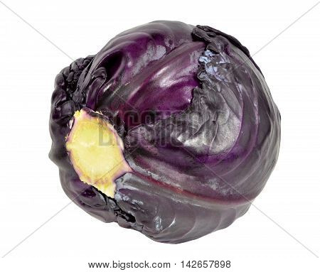 Headed out red cabbage, isolated on white background