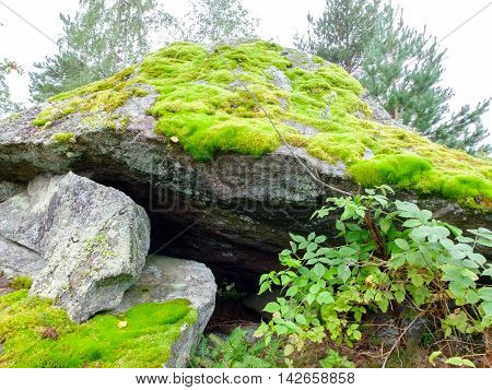 Fresh green moss on a large boulder. The moss plant covering. Soft plant of the tundra and North.