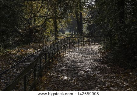 Footpath in the forest in gold autumn