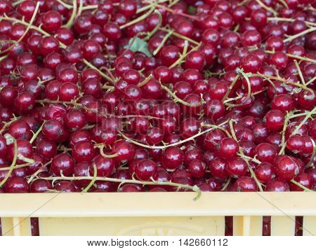Organic and fresh red currants on local farmers market.