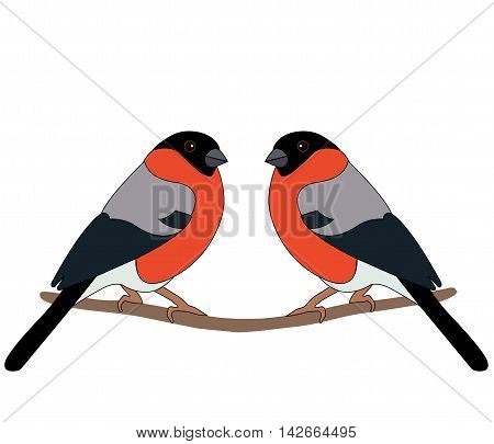 Two bullfinch sitting on a branch on a white background