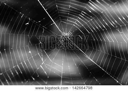 Closeup Black And White Photo Of Spider Web