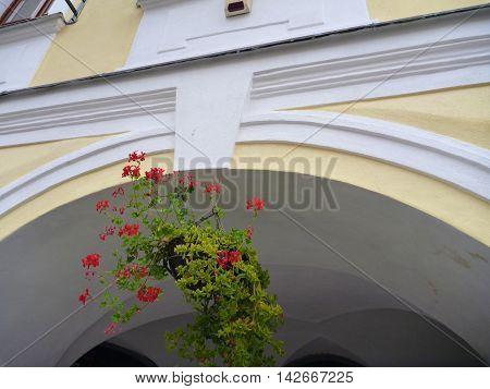 Decorative Flower Pot In The Arcade