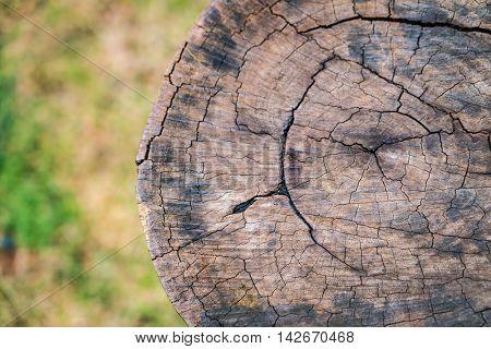 Close up of Stump tree