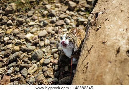 Adorable ginger cat licks its mouth in the stones.