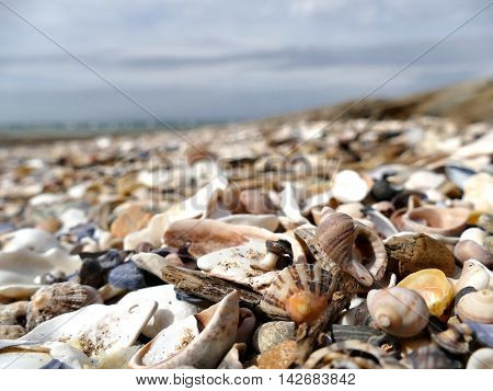 Natural Sand And Shells With Defocused Background