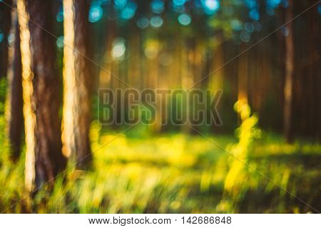 Nature Green Natural Blurred Background Of Out Of Focus Forest. Bokeh, Boke Woods With Sunlight Colors Absract Background