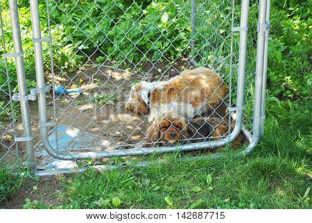 Two Lonely Dogs in a Small Kennel Cage Outside