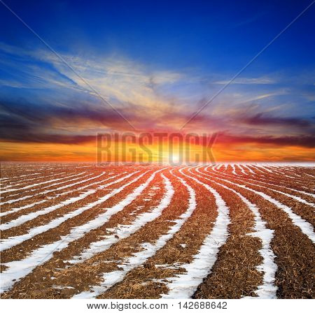 plough-land meadow with snow rows on sunset sky background