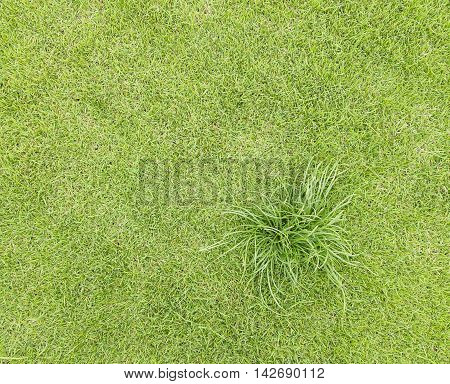 Topview Green Grass On The Field