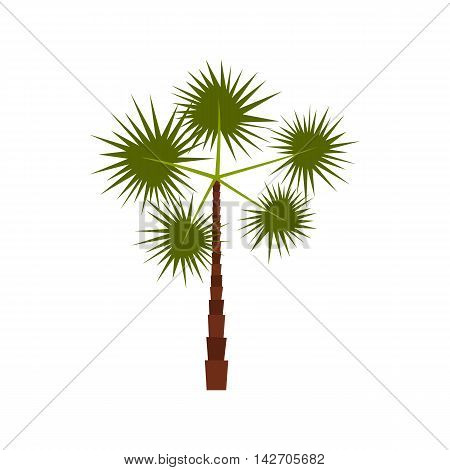 Spiny tropical palm tree icon in flat style isolated on white background. Flora symbol