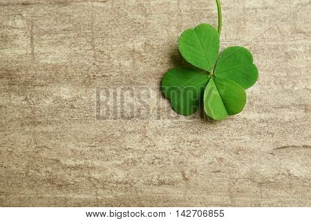 Green four-leaf clover on wooden background