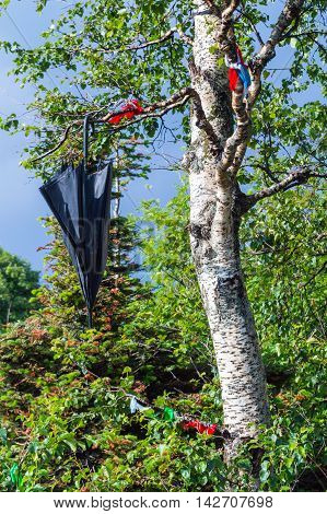 Black Umbrella Hanging On The Birch Tree