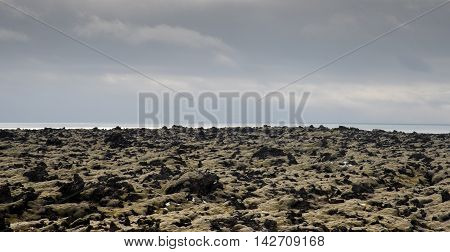 Icelandic nature with green moss on the volcanic field and the Atlantic ocean.