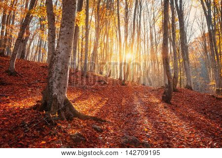 Colorful Autumn Landscape With Trees And Orange Leaves. Mountain Forest