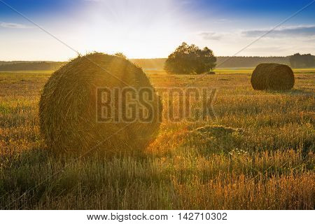 Sun just rises over a field of stubble with haystacks. August countryside landscape.