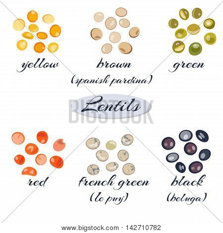 Set of different types of lentils.Macro. Yellow brown green red french green black lentils Vector illustration