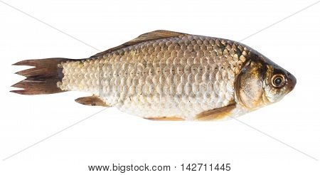 crusian carp close up isolated on white