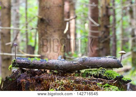 Mushrooms in deep moss forest with green fresh moss