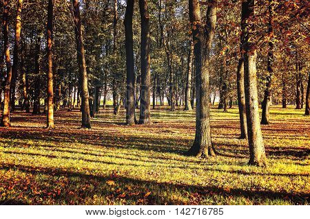 Autumn park covered with fallen autumn leaves in bright sunshine- colorful autumn landscape in nice sunny autumn weather. Picturesque autumn landscape view