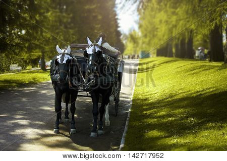 Two horses harnessed to a carriage standing on the road in the shade.