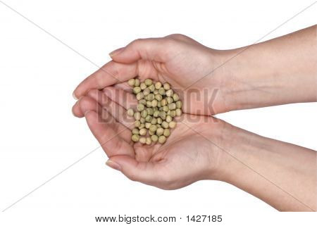 Two Hands Holding Seeds
