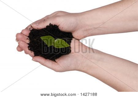 Two Hands Holding A Plant
