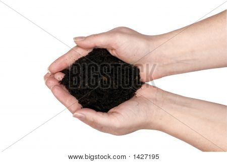 Two Hands Holding Dirt