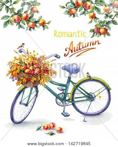 Hand drawn illustration of bicycle with basket ripe red apples. Watercolor sketch of green bike sitting goldfinches apple tree branches. Autumn background. Inscription Romantic Autumn.