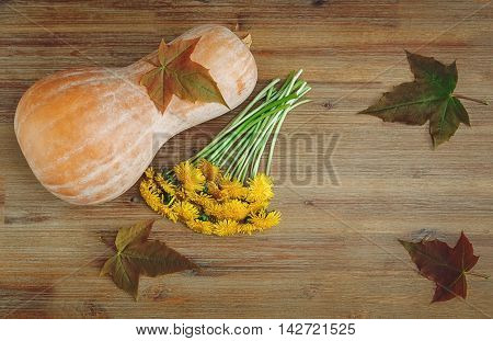 Pumpkin Green Leaves,Bunch of Dandelions on the Wooden Table.Autumn Garden's Vegetables.
