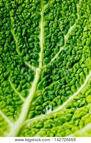 Savoy cabbage macro leaf close up vertical background
