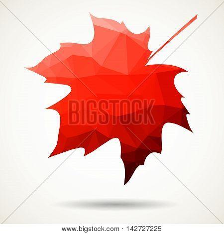 Triangular Maple Leaf