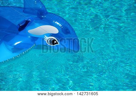inflatable dolphin in a clear blue pool ideal for a background or banner. shot outdoors on a sunny day room for text and copy space