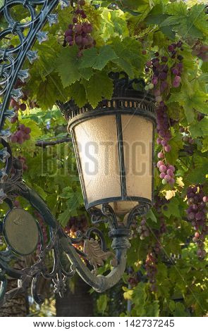 green leaves and purple grapes with lamppost