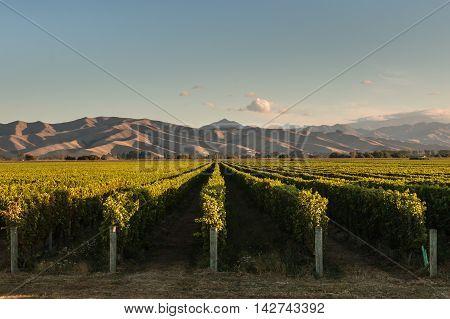 Wither Hills vineyards in Marlborough, New Zealand